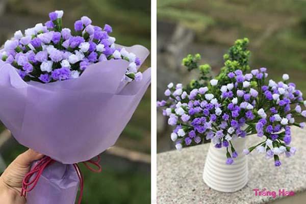 Tặng hoa Salem tím đẹp lãng mạn cho ngày kỉ niệm đôi lứa