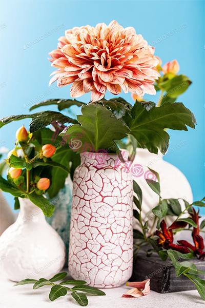 Top 9 loại hoa Tết ở miền Bắc vừa đẹp vừa ý nghĩa nhất