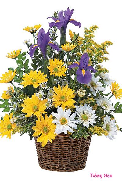Lễ mừng thọ nên tặng hoa gì để bày tỏ lòng thành, hiếu thảo
