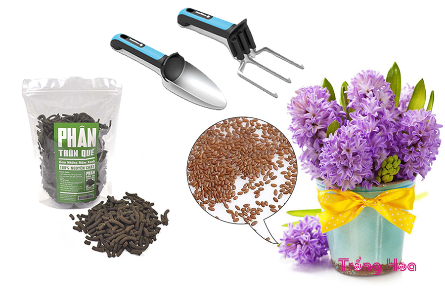 Phương pháp gieo hạt trồng hoa tiên ông