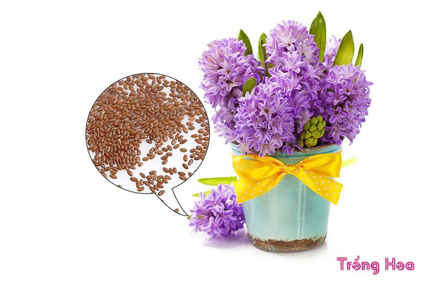 Cách nhân giống hoa dạ lan hương