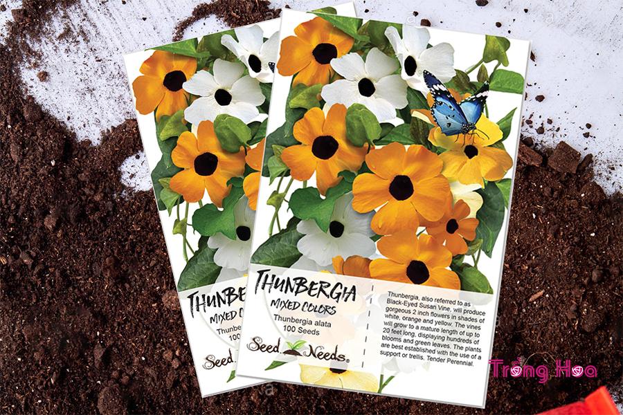 Hướng dẫn cách trồng hoa mắt huyền từ hạt giống;