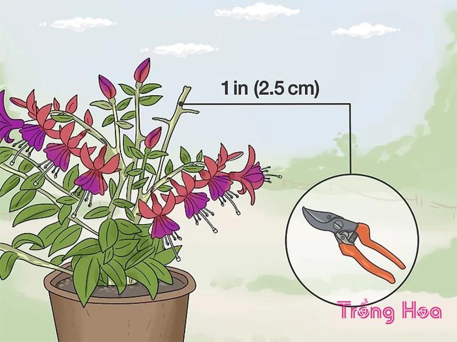 Cách cắt tỉa cây hoa đèn lồng