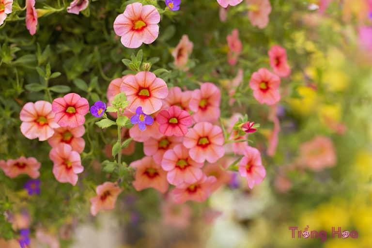những bài thơ hay về hoa dạ yến thảo