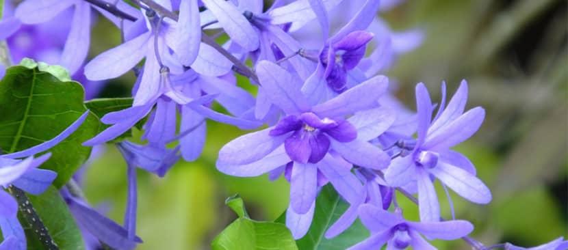 Hướng dẫn cách trồng hoa mai xanh