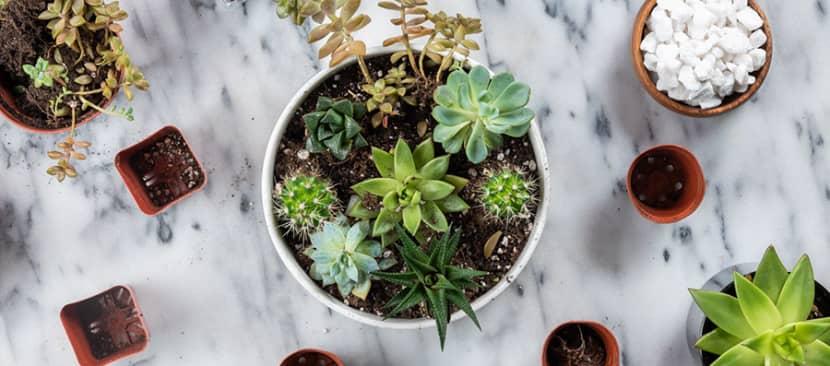 Cách tạo khu vườn sen đá thu nhỏ