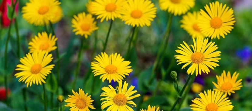 Lý do tại sao cây không nở hoa