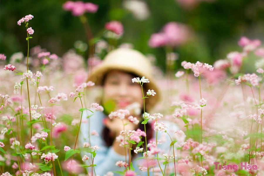 Ý nghĩa hoa tam giác mạch