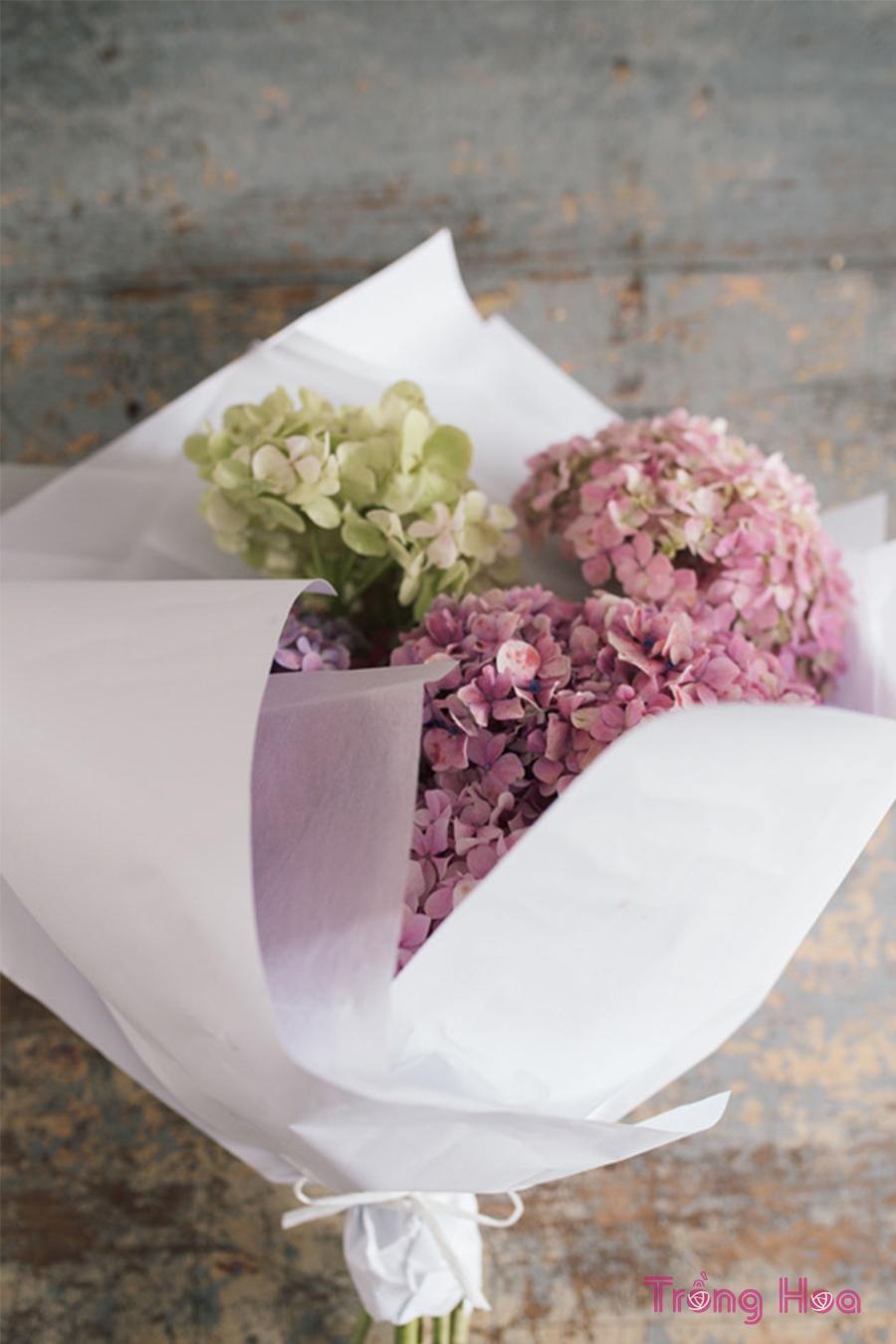 cách bó hoa cẩm tú cầu với giấy trắng