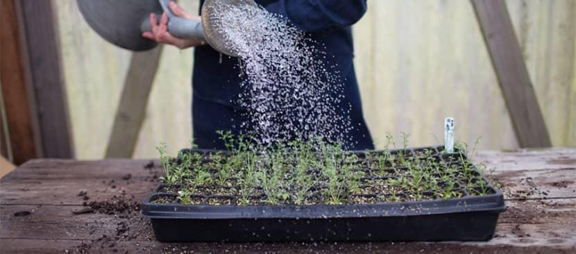 Cách bắt đầu trồng hoa từ hạt giống