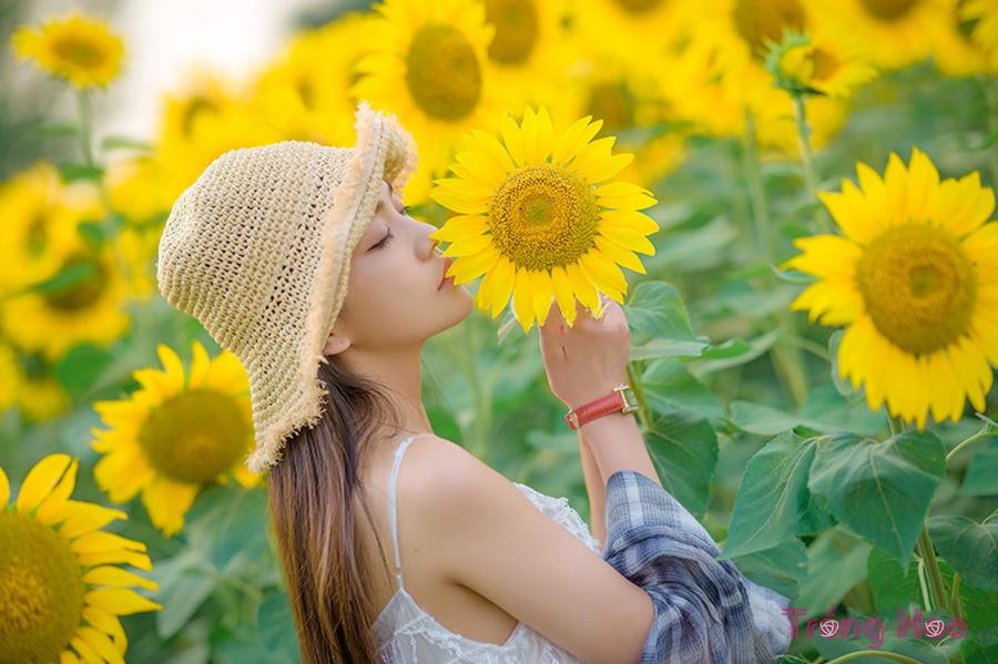 Tổng quan về hoa hướng dương Sunflower