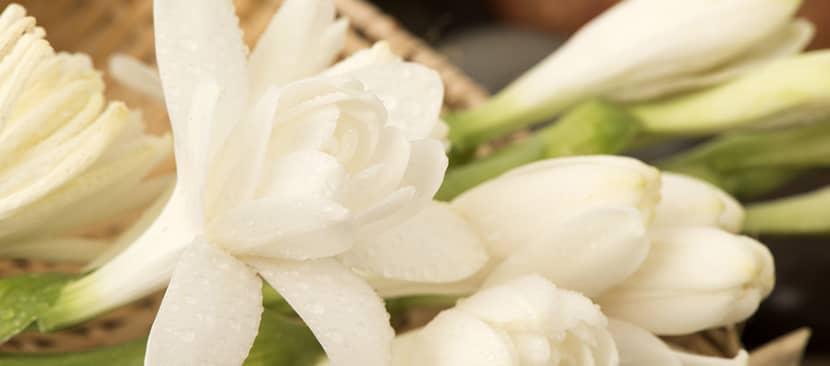 Sự tích về hoa huệ