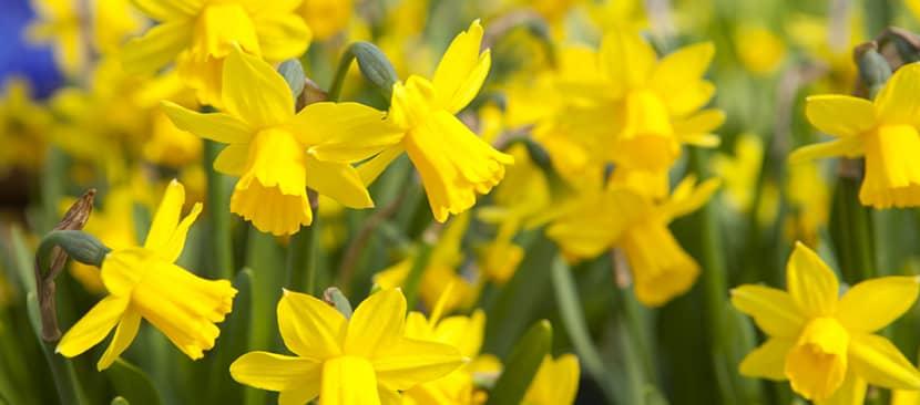những bài thơ hay về hoa thủy tiên