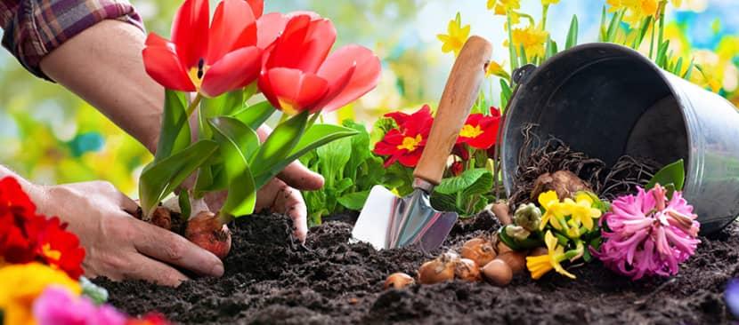 10 loại củ trồng hoa vào mùa thu