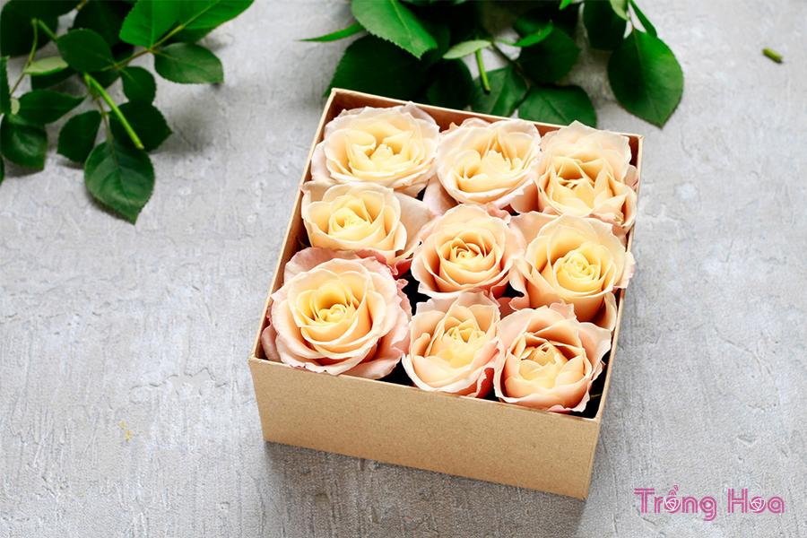 Cách làm hộp quà hoa hồng tươi