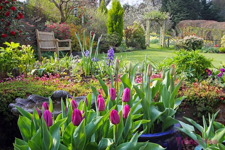 6 Mẹo để có một vườn hoa mùa xuân tốt hơn