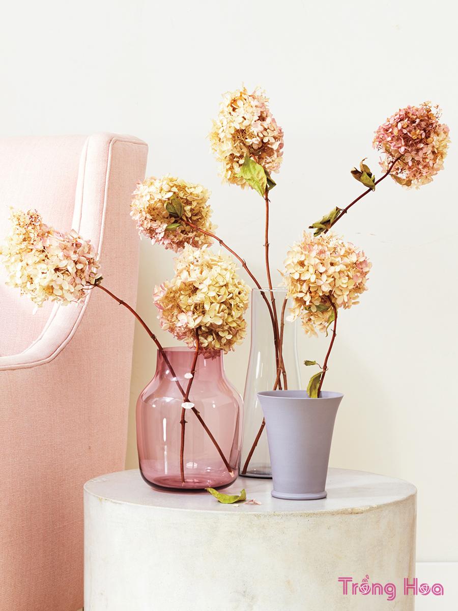 Cách Làm khô và Bảo quản Hoa Cẩm tú cầu