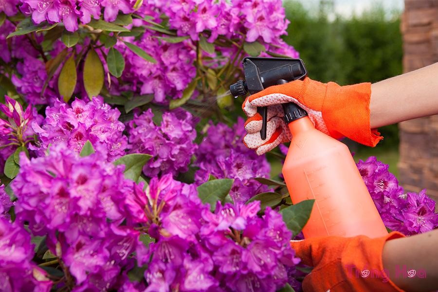 sâu bệnh hại cây hoa đỗ quyên