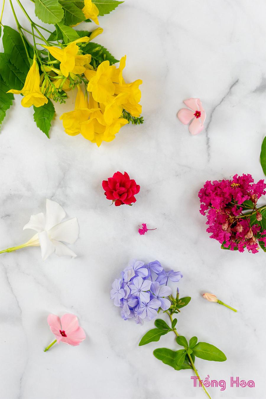 4 Cách tự làm hoa ép