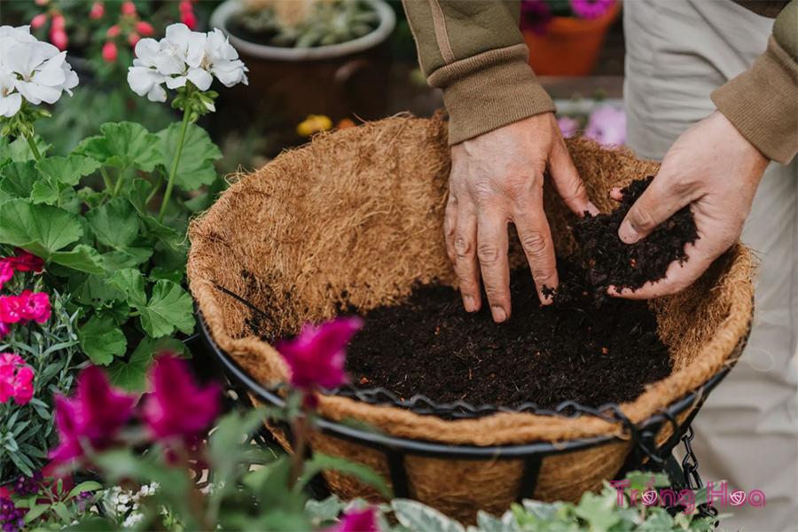 Các bước trồng giỏ hoa treo