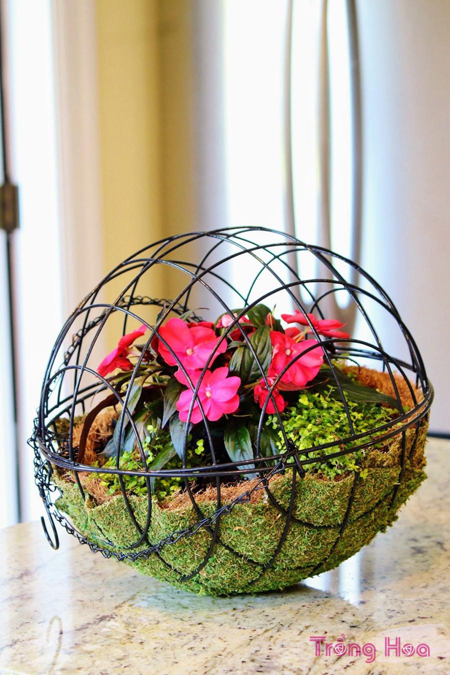 cách làm giỏ treo hoa hình cầu